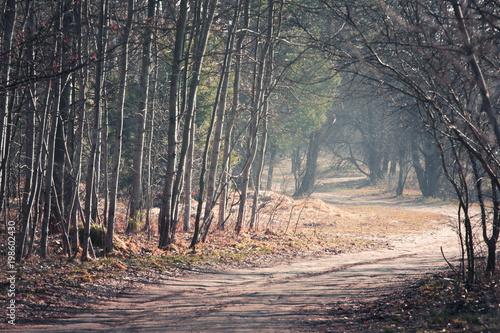 Fotobehang Weg in bos Droga przez las