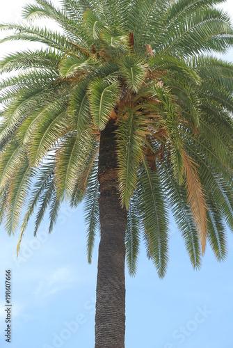 Fotobehang Nice Palm tree in Nice, France