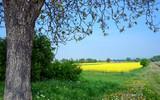 Auszeit im Frühling, Glück, Freude, Entspannung, Lebenslust: leuchtend gelbe Löwenzahnwiese unter blauem Himmel mit Sonne und Wolken :) - 198618810