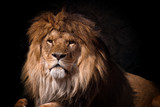 portrait of a lion looking