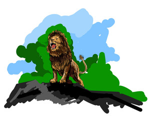 Lion sketch. Lion sketch colorful hand drawing