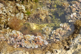 Transparent sea water with seaweeds on sea bottom - 198645252