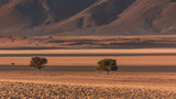 Namib rand reserve landscape with shadows around sand and acacia trees