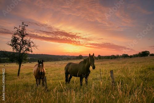 Fotobehang Paarden Sonnenaufgang