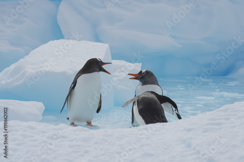 Fotobehang Antarctica Gentoo Penguins on the ice