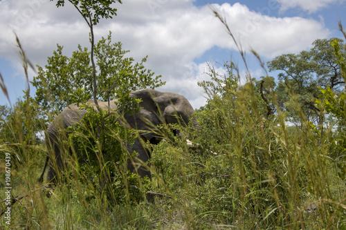 Fotobehang Bleke violet Animals in Africa
