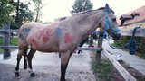 Small horse colored with hearts and drawings 4K - 198683255