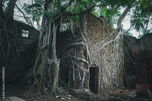 The ruins of the building in the roots of the trees