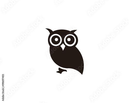 owl bird animal