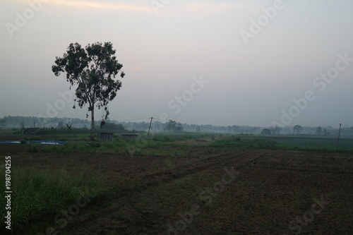 Foto op Aluminium Grijze traf. corn fields morning