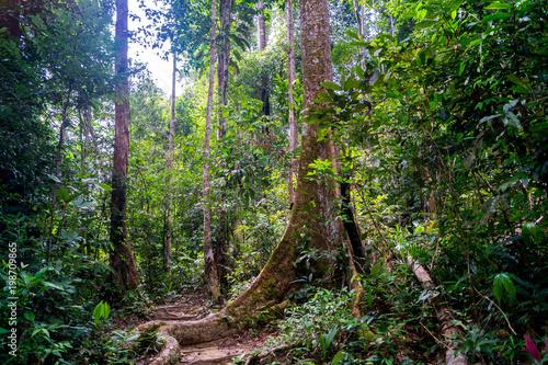 W środku dżungli