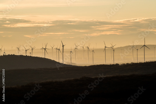 Foto op Canvas Beige Wind Farm of Wind Turbines