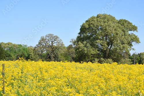 Fotobehang Meloen Open Field of Yellow Flowers