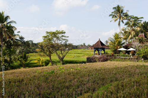Keuken foto achterwand Bali Green Landscape in Ubud Bali