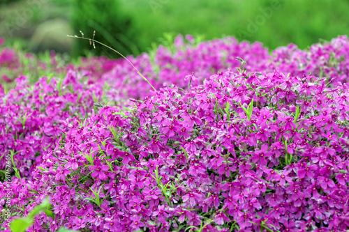Leinwanddruck Bild meadow flowers bloom