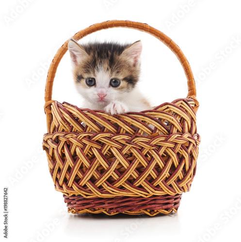 Fotobehang Kat Small cat in a basket.