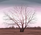 Vector illustration tree. Landscape oak without leaves - 198844036
