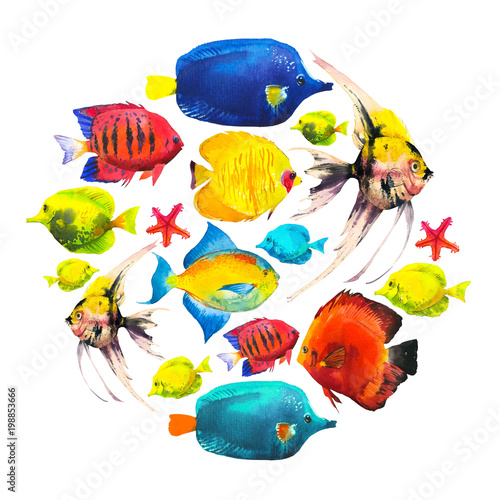 obraz lub plakat Round composition with tropical fish. Watercolor illustration with hand drawn aquarium exotic fish on white background.