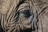 Nahaufnahme Elefant