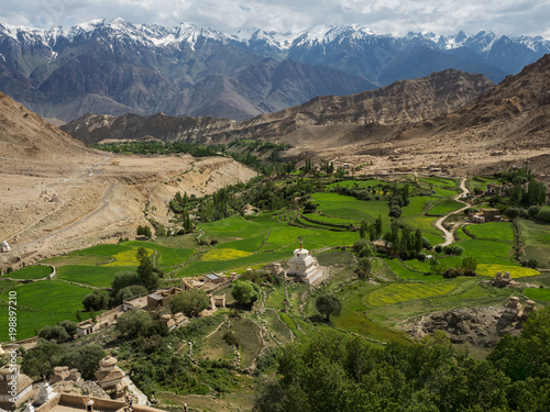 Foto op Aluminium Rijstvelden Green fields of mountain barley in the Tibetan village, stretched among high peaks and mountain ranges, Ladakh, the Himalayas, Northern India.