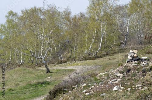 krajobraz wrzosowiska na rogu Butlersheimer na wiosnę