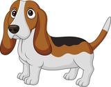 Cartoon dog Basset Hound isolated on white background