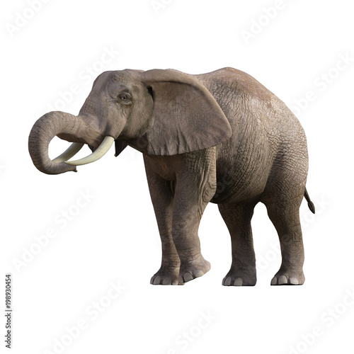 Poster Antilope Grey Elephant isolated on white, 3d render