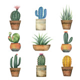 Watercolor vector set of cacti and succulent plants isolated on white background. - 198932002