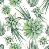 Watercolor vector seamless pattern of cacti and succulent plants isolated on white background. - 198932025