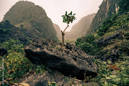 Foto op Plexiglas Zwart a single branch of a tree grows in rural vietnam
