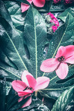 Tropical leaf and pink  flowers background, top view