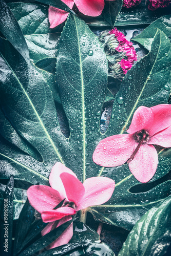 Foto Murales Tropical leaf and pink  flowers background, top view