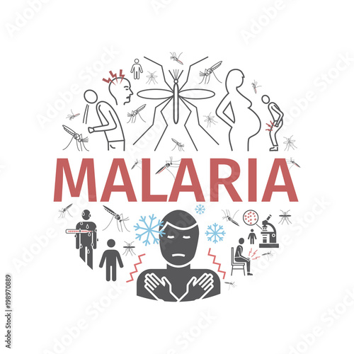 Malaria line icon banner. Infographics. Symptoms, Vector signs for web graphics. - 198970889