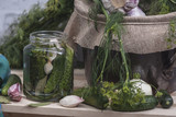 Preparation for pickling cucumbers - 198971806