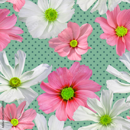 Seamless pattern from  cosmos flowers  on a background in polka dots, photorealistic collage.