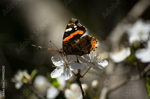 Butterfly. Spring flowers - 199002282