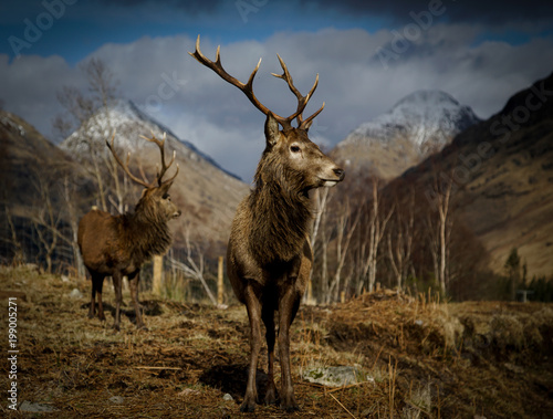 In de dag Chocoladebruin Stags Glen Etive