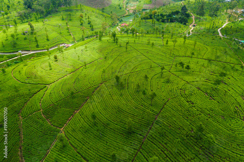 Tea plantations in the mountains. Aerial View - 199007050