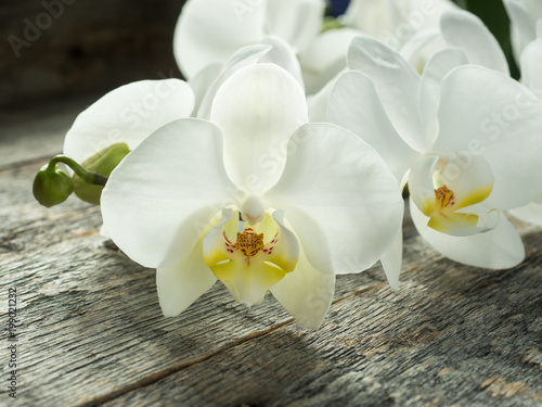 White orchid Phalaenopsis on a wooden background close-up