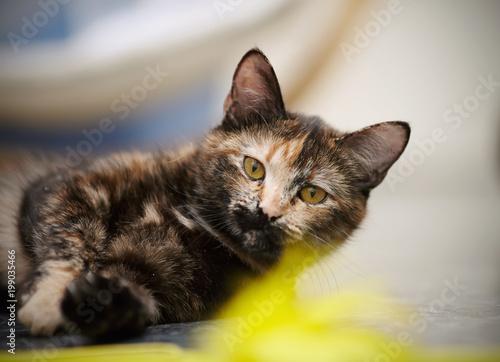 Portret kota o wielu kolorach