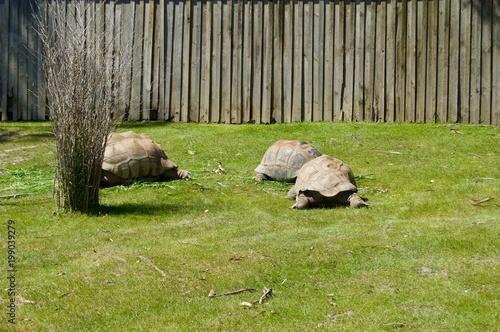 Fotobehang Pistache Australian Wildlife - Turtles