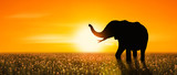 silhouette of an adult elephant in half you have flowers at sunset