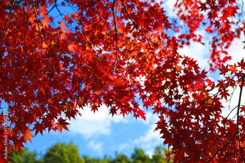 Fotobehang Rood paars 秋の山の公園の風景7
