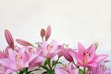 ピンクのユリ