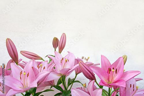 Różowe lilie