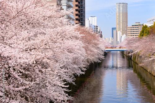 Foto op Plexiglas Lichtroze 目黒川の桜