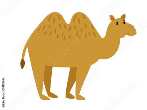 Fototapeta Camel. Cartoon vector caravan camel character on white