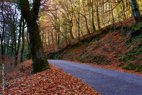 Foto op Canvas Herfst Autumn