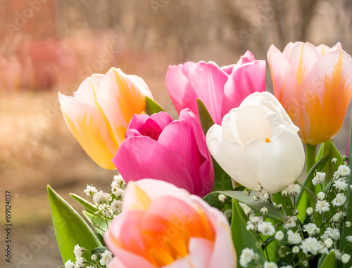 colored tulips close-up, macro photography - 199124837