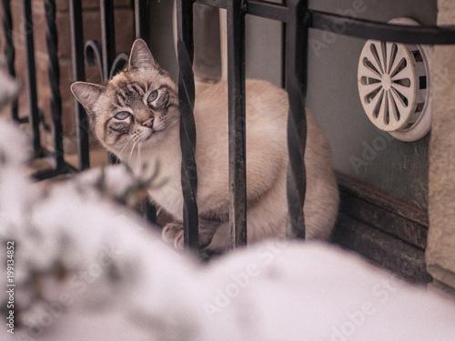 Fotobehang Kat Katze im Schnee